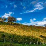 Votre propriété viticole en Méditerranée