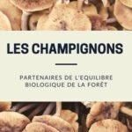 Les champignons, de formidables partenaires de l'équilibre biologique de la forêt